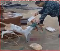 فيديو| صحة البرلمان تعلق على واقعة ذبح عمال صينيين للكلاب الضالة