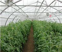 الزراعة تواصل طرح منتجات «الزراعات المحمية» لمحاربة الغلاء