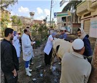 مركز البحوث الزراعية ينظم قافلة بيطرية بقرى محافظة دمياط