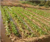 5 نصائح لمزارعي الموالح لتفادي الأضرار والخسائر