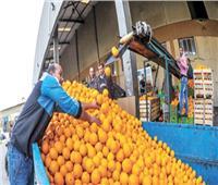 قطار الصادرات الزراعية يواصل الانطلاق.. وتوقعات بالوصول إلى 6 ملايين طن قريبًا