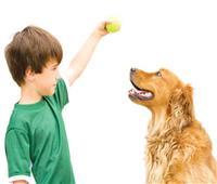 تعرفي على التأثير النفسي لهجوم الكلاب على الأطفال.. وكيفية علاجه