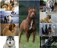 صور.. احذر الاقتراب من هذه الكلاب الأكثر شراسة