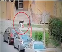 فيديو| تعرف على منقذة «طفل مدينتي» من أنياب الكلبين