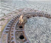 شاهد |رجال الإطفاء بألمانيا ينقذون « فأر»