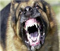 إخلاء سبيل مالك كلبي «التجمع» وحبس الخفير