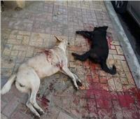 «برلماني»: قتل الكلاب الضالة آخر حل سيتم اللجوء إليه