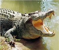 الحكومة تنفي هروب تمساح من حديقة الحيوان بالجيزة