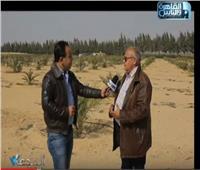 فيديو  مزرعة مصرية تنتج أحدث شتلات البرحى والمجدول بالهرمونات الطبيعية