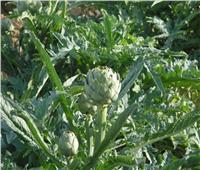 الزراعة تصدر نصائح لـلتعامل مع 6 محاصيل خلال مارس