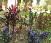 «البحوث الزراعية» يعقد ورشة حول دور الحديقة النباتية في التنمية بأسوان