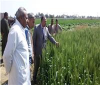 محافظ أسيوط : بدء تنفيذ خطة تطوير مزارع «الثروة الحيوانية»