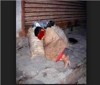 «ماشافوهمش وهم بيسرقوا».. قتل متسول على يد عصابته في النزهة