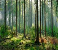 الأمم المتحدة تحتفي باليوم العالمي للغابات .. الخميس