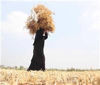 «أمهات في الظل».. رحلات شقاء 3 سيدات لـ«حياة كريمة»