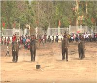 شاهد| سباق الفيلة « بوون دون » بـ «فيتنام»