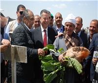 صور| «أبو ستيت»: تجربة زراعة القمح على المصاطب حققت نجاحا كبيرا