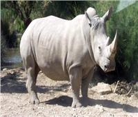 أخرهم «زيزي».. رحلت عن حديقة الحيوان بعد أن أسعدت الملايين 30 عامًا