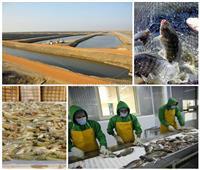 مشروعات الاستزراع السمكي.. مهمة قومية لتحقيق الاكتفاء الذاتي للمصريين