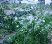 «الزراعة»: توصيات فنية للمزارعين للتعامل مع موجات الطقس غير المستقرة خلال الأيام المقبلة