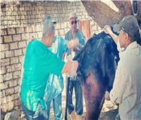 الزراعة تنظم قوافل بيطرية مجانية في محافظة الأقصر