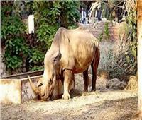 محافظة الجيزة: غدا مفاجأة لزائري حديقة الحيوان