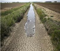 4 إجراءات تنفذها الزارعة لمواجهة ندرة المياه.. تعرف عليها