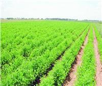 6 أهداف إستراتيجية لوزارة الزراعة لتحقيق التنمية المستدامة.. تعرف عليها