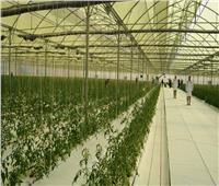 «أبوستيت»: 6 إجراءات لإحداث طفرة في الإنتاج الزراعي