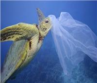 محافظ البحر الأحمر يحظر تداول البلاستيك اعتبارًا من 1 يونيو