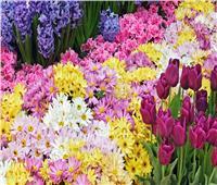 اليوم| وزير الزراعة يفتتح «الصالون التثقيفي» بمعرض زهور الربيع