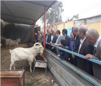 صور.. وزير الزراعة يتفقد مزرعة ومصنع للإنتاج الحيواني المتكامل بمينا القمح
