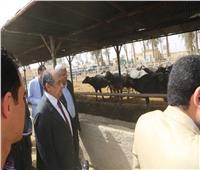 قرار جديد من وزير الزراعة حول مشروع الإنتاج الحيواني بأسيوط..تعرف عليه