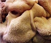 دراسة: تناول  لحوم الحيوانات من «الأنف إلى الذيل» ينقذ كوكب الارض من الدمار