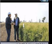 فيديو| الزراعة تكشف 6 أصناف جديدة من القمح