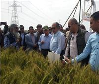 صور| وزير الزراعة يتفقد محصول القمح بمحطة بحوث سخا في كفر الشيخ