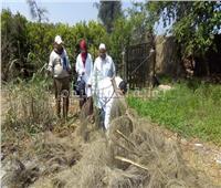 محافظ المنوفية: إجراءات احترازية لمواجهة ظاهرة الثعابين بقرية شبرا بخوم