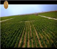 فيديو| نهضة بمنظومة الغذاء.. استصلاح الأراضي وفتح أسواق التصدير