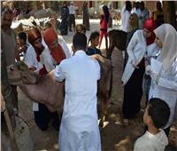 الزراعة: تحصين مليون و611 ألف رأس ماشية ضد الجلد العقدي حتى 15 أبريل