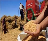 بشاير الخير..الزراعة تعلن توريد 385 ألف طن قمح مع بدء الحصاد