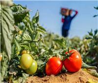 «الجايكا اليابانية» تسلم خطة مشروعها لوزارة الزراعة