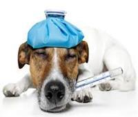 نقابة البيطريين تكشف حقيقة انتشار «أنفلونزا الكلاب» وانتقالها للبشر