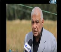 فيديو| أستاذ وراثة نباتية: سلالة «رأس سدر 1» تحقق الاكتفاء الذاتي من القمح لمصر