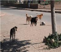 ٢٥ مايو نظر دعوى وقف قتل كلاب وقطط الشوارع