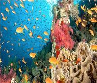 بـ5 جنيهات شاهد أروع الشواطئ والمناظر.. هنا في «محمية رأس محمد»