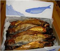 التموين تطرح 50 طن أسماك يوميًا والرنجة بـ35 جنيها استعدادًا لشم النسيم