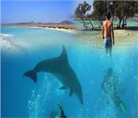 من «بيت الدلافين» لـ«المياه الفيروزية».. 6 معالم سياحية تخطف أنفاسك بمرسى علم