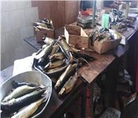 الصحة تعدم 12 طن أسماك مملحة فاسدة وتغلق 419 منشأة غذائية مخالفة