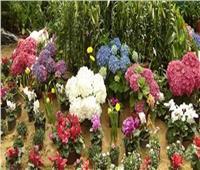 الجمعة.. وزير الزراعة يكرم المشاركين في معرض زهور الربيع