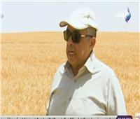 الزراعة: مصر حققت الاكتفاء الذاتي من تقاوي القمح